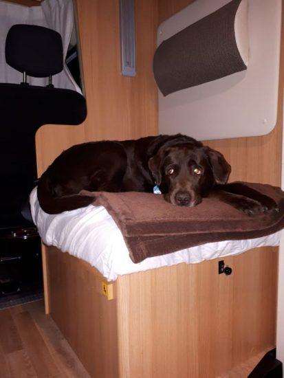 Wohnmobil mieten mit Hund